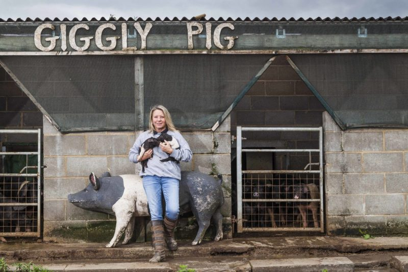 Tracy Mackness, owner of Giggly Pigfarm